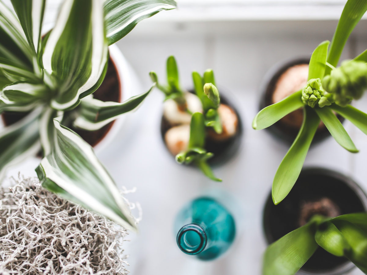 The 10 best indoor plants